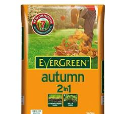 EvergreenAutumn